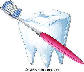 A toothbrush and a tooth - Illustration of a toothbrush and...