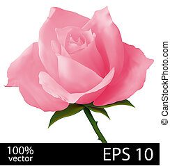 Pink rose realistic illustration - Pink rose bud Photo...