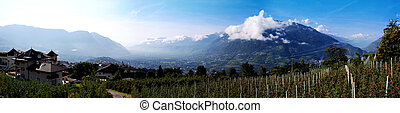 Apple orchards in the valley basin of Meran
