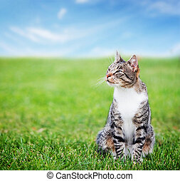 Cute cat sitting on green spring grass on sunny day....