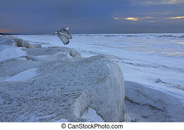 Snowy Owl Flying Over Frozen Shoreline - Ontario, Canada -...