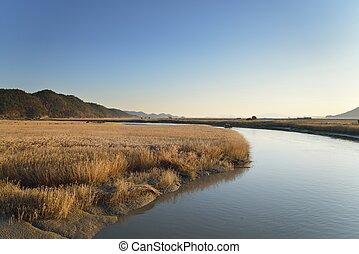 Sunchoen Bay in Korea - Reeds field and Boardwalk in...
