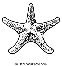 Sea star isolated on white Sketch vector illustration