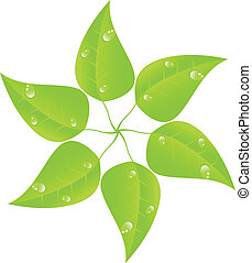 Green leaf with drops of dew. Vector. EPS 10