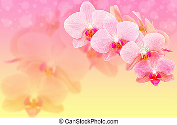 Romantic pink spotted orchid flowers on blured bokeh background