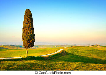 Tuscany, lonely cypress tree and white rural road on sunset....