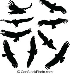 Condor Silhouettes - Collection of condor silhouettes, in...