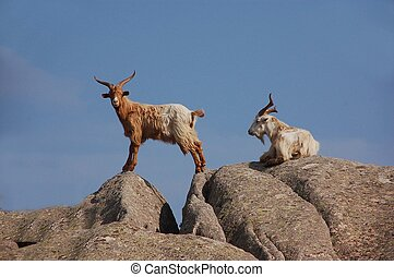 granite and goats