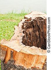 stump  - stump