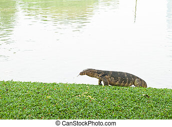 giant lizard amphibious reptile , useful for biological and...