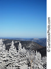Snowy Trees in mountains