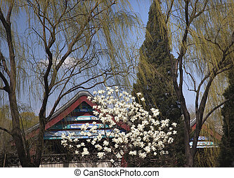 Magnolias Willows Spring Summer Palace Beijing China - Wite...