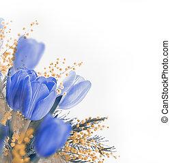 blu, Tulips, mimosa, primavera, fondo