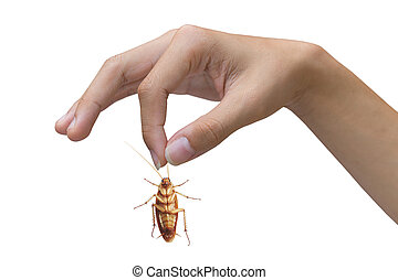 Hand holding brown cockroach over white background