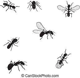 Vector collection of doodle ants - Vector collection of...