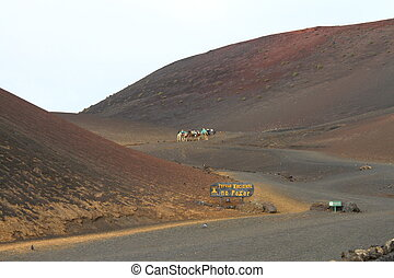 Camel train Timanfaya National Park Lanzarote Spain