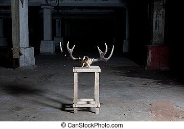 deer skull on stand in dark basement