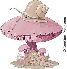 champignon, escargot