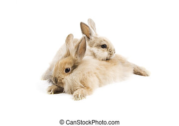 Rabbits - Two adorable rabbits isolated on a white...