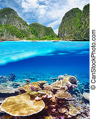 Lagoon with coral reef underwater view - Beautiful lagoon...