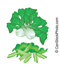 Fresh Green Pok Choi on A White Background - Vegetable,...