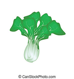 Fresh Green Bok Choy on A White Background - Vegetable,...
