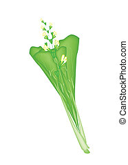 Fresh Green Mustard Plant on A White Background - Vegetable,...