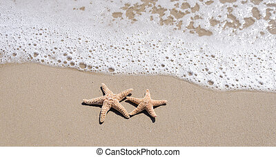 Starfishes on the sandy beach - Two Starfishes on the sandy...