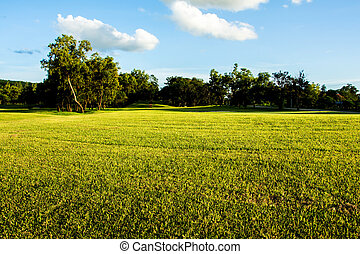 field of spring grass against blue sky with clound. - field...