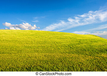 field of spring grass against blue sky with clound