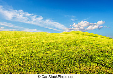 field of spring grass against blue sky with clound - field...
