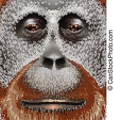 un, orangután