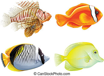 Four fishes - Illustration of the four fishes on a white...