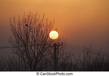 Sunset Beyond The Trees In Beijing China