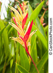 Bird of Paradise flower  - Bird of Paradise flower