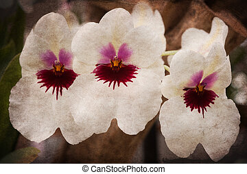 old grunge flower