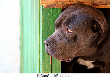 Black Dog Looking From The Kennel