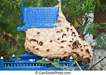 Wasp nest on the Joss house