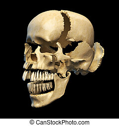Human skull with parts exploded.