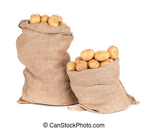 Ripe potatoes in burlap sacks. Isolated on a white...