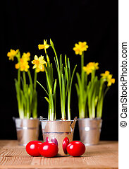 Red Easter eggs and yellow daffodils in tin pail