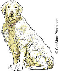 Golden Retriever - A noble Golden Retriever sitting.
