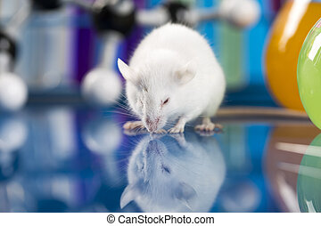 Research on mouses, clinical tests