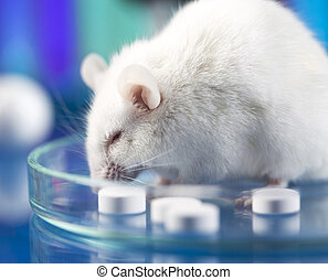 Research on mouses, clinical tests, laboratory