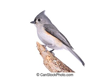 Bird Isolated On White - Tufted Titmouse (Baeolophus...