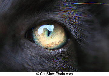 nice eye of black cat as animal background