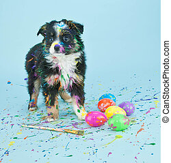 Coloring Easter Eggs - A silly little Australian Shepherd...