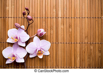Orchid. - Pink orchid on a wooden background.