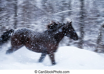 Fast Horse Galloping during a Blizzard in Nature (with...
