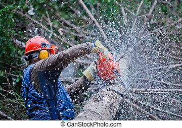Professional Lumberjack Cutting a big Tree in the Forest...